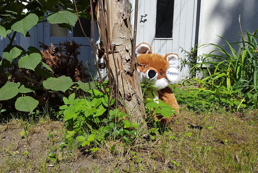 Schlau und scheu - Fuchs Fosco